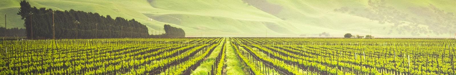 Crops in Soledad, CA